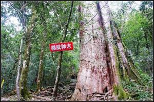 20160723 赫威神木