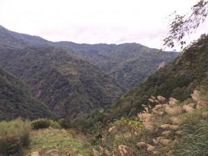 山谷與芒草